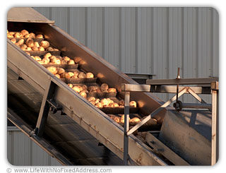 Potatoes, Metaphor for Unpaid Work
