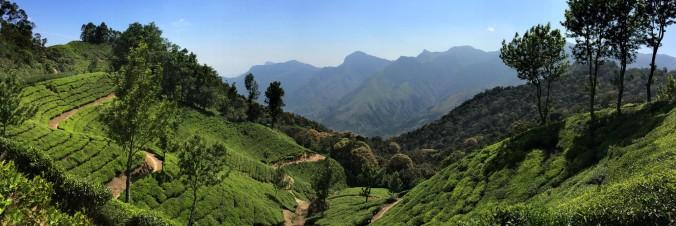 Tea plantations everywhere one looks in Munnar.