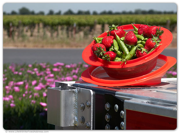 One of the joys of spring in California. Fresh picked, fragrant, succulent strawberries in April and crisp, crunchy sweet peas. All a Vespa ride from the Lodi, California Flying J on I-5.