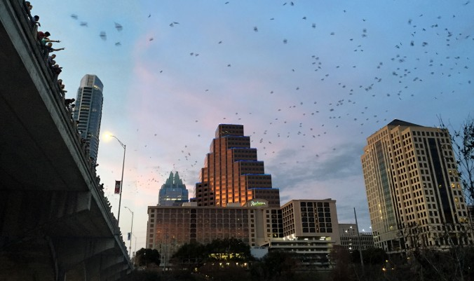 Downtown Austin is home the largest urban colony of bats. It's an unusual but spectacular tourist attraction. Between March and November when the temperatures are right, the bats emerge nightly at sunset to feast on Austin's bugs.
